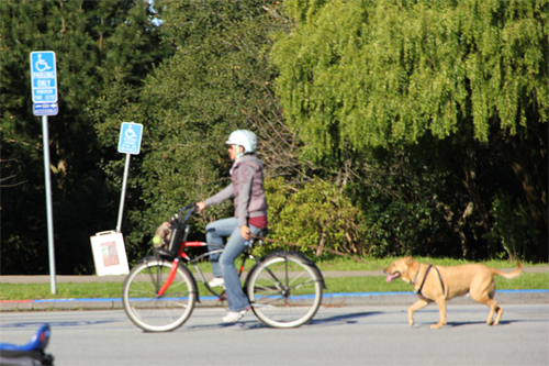 What a nice day to bring your dog along?.