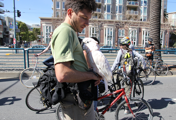 Sunday Streets are good for feathered friends too!