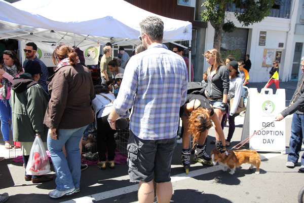 Dog Adoption Day - plenty of new dog owners today.