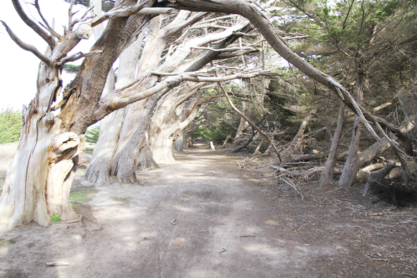 One of the interesting wooded parts of the path.