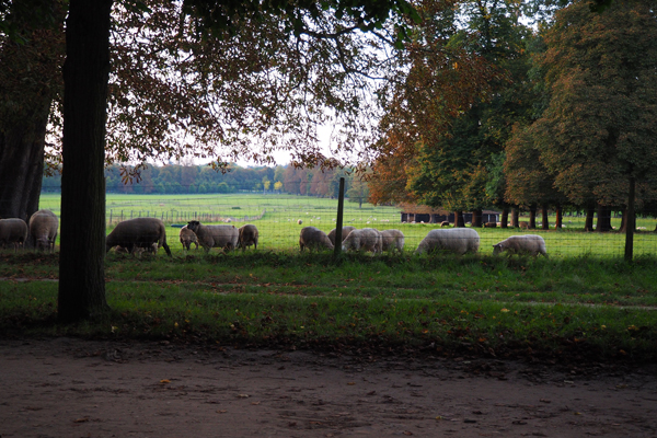 Yes, there are sheeps grazing there too.