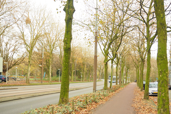 A path for both pedestrians and cyclists outside of Amsterdam.